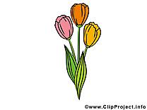Tulipes image gratuite – Fleurs clipart
