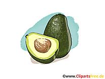 Avocado dessin à télécharger - Fruits images