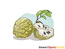 Cherimoya images - Fruits dessins gratuits