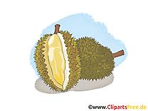 Durian fruits illustration à télécharger gratuite