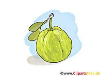 Goyave images gratuites – Fruits clipart