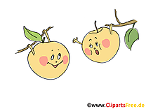 Image gratuite pommes - Fruits cliparts