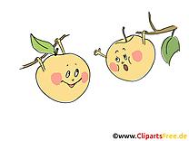 Image gratuite pommes - Fruits cliparts