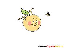 Images gratuites pomme a colorier – Fruits clipart