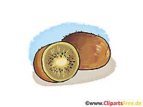 Kiwi dessin gratuit - Fruits image à télécharger