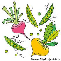 Légume images à imprimer  clipart