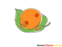 Mandarine image à télécharger - Fruits clipart