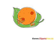 Mandarine image à télécharger - Fruits clipart