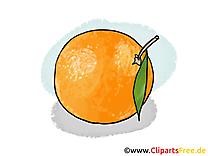 Orange dessin - Fruits cliparts à télécharger