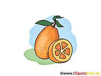 Oranges dessin - Fruits clip arts gratuits