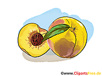 Pêches illustration - Fruits images