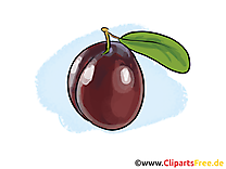 Prune clip art – Fruits gratuite à télécharger