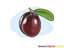Prune clip art – Fruits gratuite à télécharger
