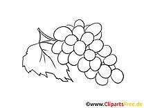 Raisin clipart à colorier - Fruits images