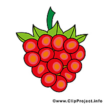 Raisin image gratuite - Fruits cliparts