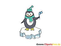 Pingouin images - Hiver dessins gratuits