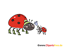 Clip arts gratuits coccinelle  illustrations