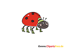 Illustration gratuite coccinelle clipart