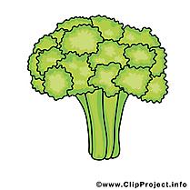 Brocoli dessin - Légume cliparts à télécharger