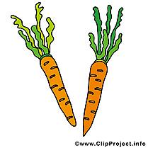 Carotte légume illustration à télécharger gratuite