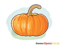 Courge dessin - Légume clip arts gratuits