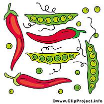 Illustration gratuite légume clipart