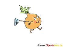 Oignon clip art gratuit – Légume images