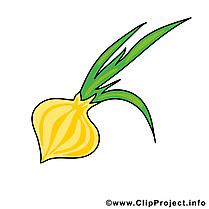 Oignon illustration - Légume images
