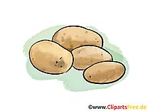 Pomme de terre clip art gratuit - Légume dessin