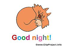 Image gratuite chat – Bonne nuit clipart