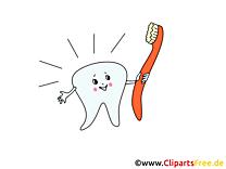Brosse à dents clipart - Médecine dessins gratuits