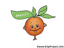 Abricot clip art gratuit – Merci images