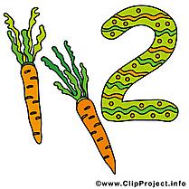 2 carotte dessin à télécharger - Nombre  images
