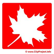 Érable images - Pictogramme dessins gratuits