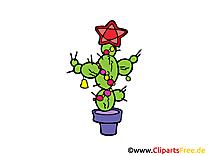 Cactus image à télécharger - Plante clipart
