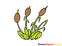 Jonc illustration gratuite - Plante clipart