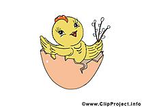 Coquille image gratuite – Pâques clipart