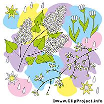 Feuilles clip arts gratuits - Printemps illustrations