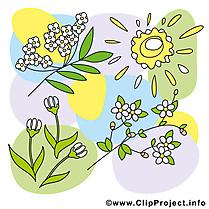 Floraison image gratuite - Printemps cliparts