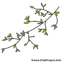Floraison image gratuite -  Printemps images cliparts