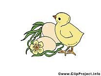Poussins images - Pâques dessins gratuits