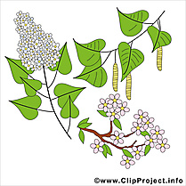 Printemps cliparts gratuis - Lilas images gratuites