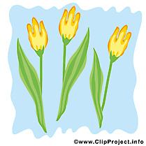 Tulipe dessin à télécharger - Printemps images