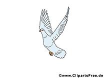 Paix colombe dessin - Pentecôte images