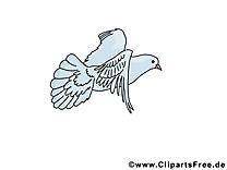Pentecôte image gratuite – Pigeon clipart