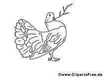 Pigeon coloriage - Pentecôte dessin