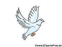Pigeon dessins gratuits - Pentecôte clipart gratuit