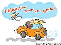 Permis de conduire  clip arts gratuits - Voiture