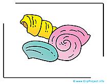 Coquillage dessin gratuit - Mer clip arts gratuits