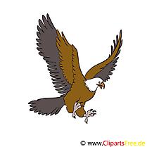 Aigle images gratuites – Animal clipart